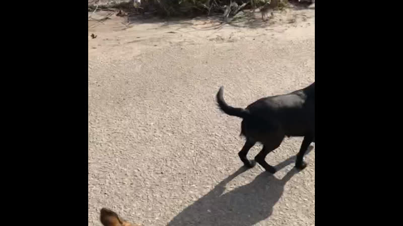 4 года кормлю собачек у Настюхе