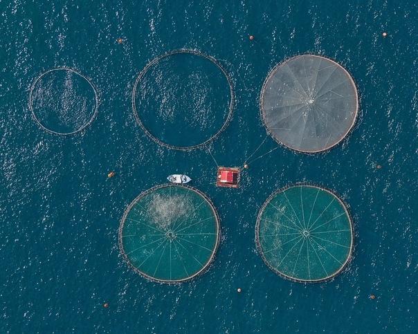 Рыбные хозяйства Греции