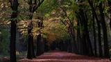 Autumn forest walk vol 3.0