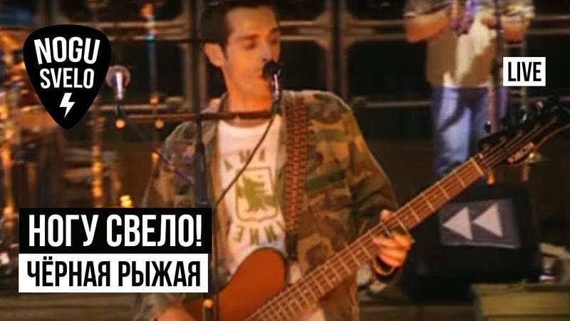 Ногу Свело! - Чёрная рыжая (Live). Концерт Потерянный поезд (2005)