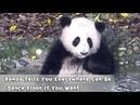 Panda Tells You Everywhere Can Be Dance Floor If You Want   iPanda