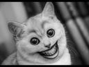Приколы с Котами - ПОПРОБУЙ НЕ ЗАСМЕЯТЬСЯ! Смешные видео с кошками и Лучшие приколы про котов!