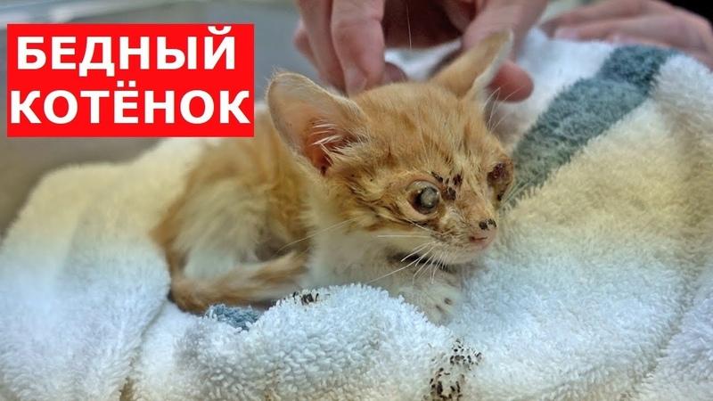 Котёнок лишился глаз.Самая печальная история.Ветеринарное ранчо