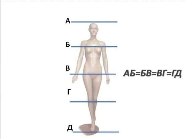 Пропорции и линии в одежде