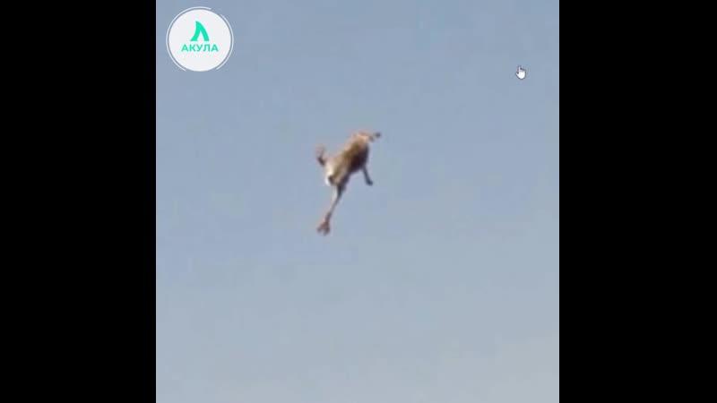 В Google Maps попал летающий кролик I АКУЛА