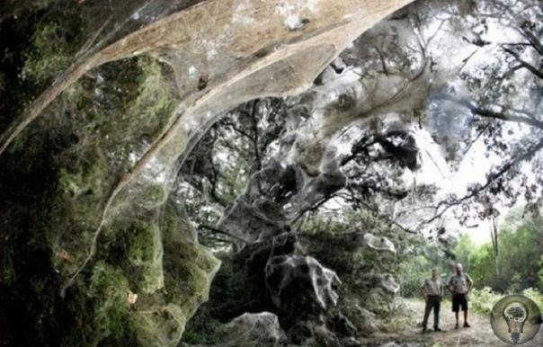 Доисторические пауки из Конго.