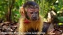 Амазония Инструкция по выживанию Документальный 2013 Франция Бразилия 1080