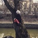 Константин Легостаев фото #11