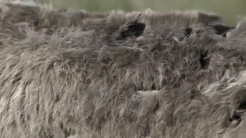 Документальный фильм Аляска Дикий мир первозданной природы