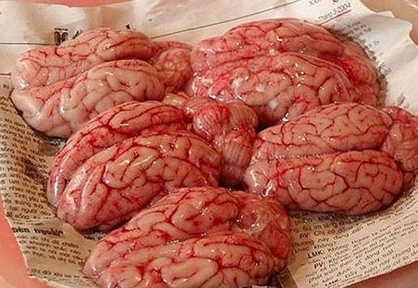 Мозги обезьяны вершина кулинарного садизма, уточённый десерт из Гонконга. В самом блюде из мозга мало необычного. Основная фишка тут в культуре поедания. Дело в том, что традиционно мозг едят