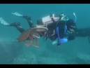 Watch terrified scuba diver fight off giant octopus Video Any Articles News