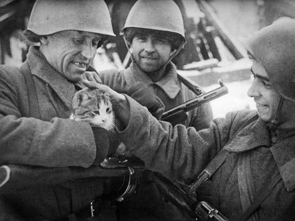 ПРО КОТА-ЗЕНИТЧИКА Лето 1944 года, Белоруссия. Через спаленное село, наступая на пятки продвигающейся армии, шла батарея МЗА. Батарея серьезная и заслуженная. 37-мм зенитные пушки держали тогда