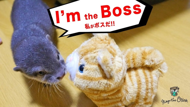 カワウソ ビンゴ「ここのボスが誰か教えてやる」2018年まとめ(Otter Bingo is telling the new guy who is the Boss here)