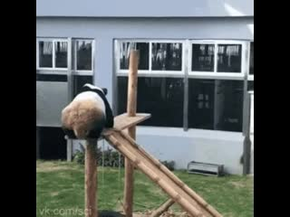 Безудержное веселье панды:)