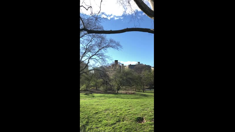 Central Park. early spring.