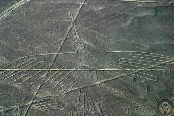 Новое исследование изображений птиц на таинственных линиях Наска в Перу