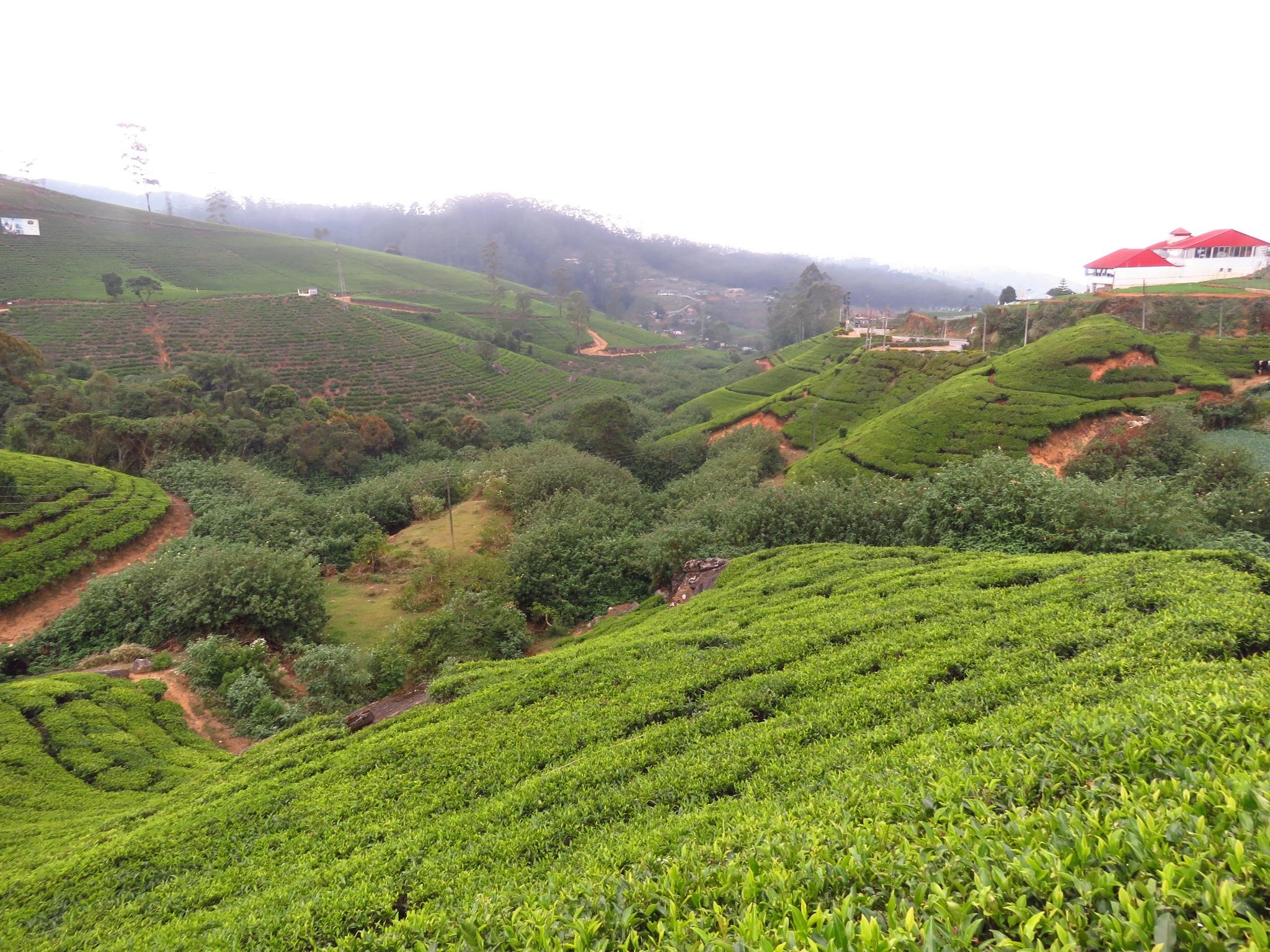 Самое холодное место Шри-Ланки - Нувара-Элия Нувара-Элия