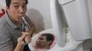 Thử Thách Ỉa Ra C. ứ. c Ăn Phở Bò Trong Bồn Cầu Toilet