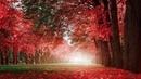 30 Minutes of Beautiful Romantic Music: Guitar Music, Violin Music, Cello Music, Piano Music ★74