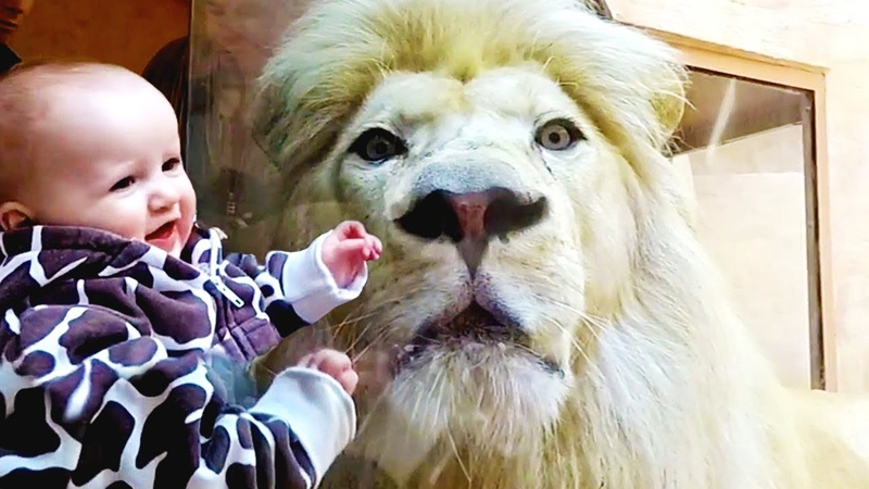 Kids and Animals at the Zoo | Funny Fails Videos