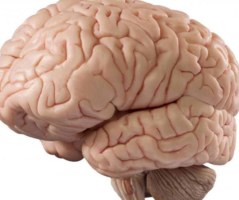 Недостаток сна может привести к неправильной работе нейронов