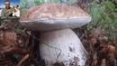 Il top dei funghi porcini al Parco dei cento laghi Ottobre 2018