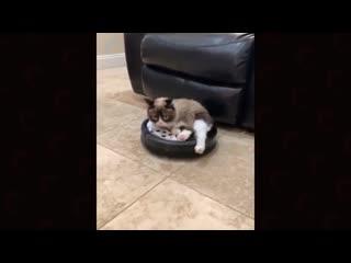 Из последних видео grumpy cat