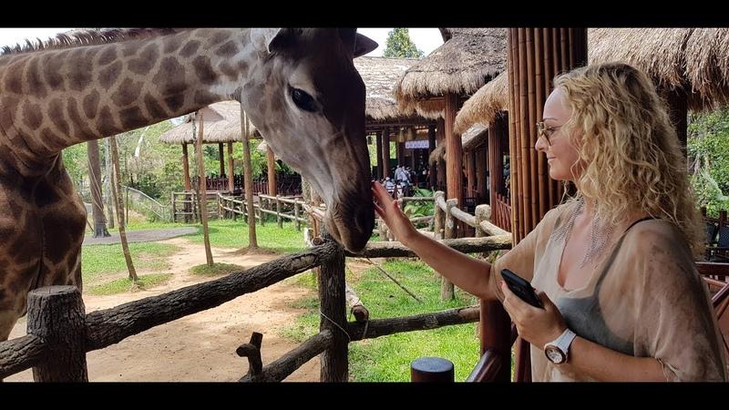 Touching a HUGE Giraffe Tongue!