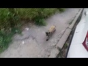 Реакция кошек на сигнализацию