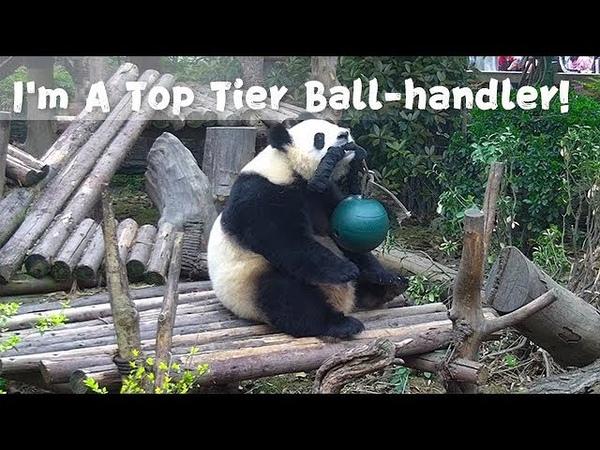 Im A Top Tier Ball-handler! | iPanda