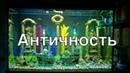 Оформление аквариума 500л декорациями в стиле Античность