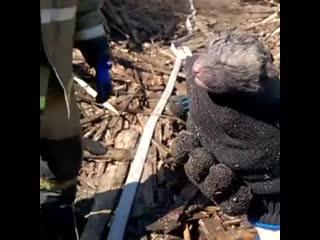 Пожарные спасли двух лисят.