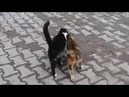 Two male cats reject same female cat in heat Opposite World