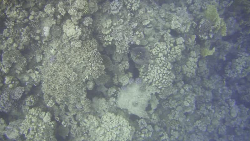 Черепаха Красное Море