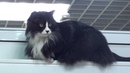 Жирный Кот гоняет собак в Зоомагазине где обитает 16.5.19 Дмитриев Дмитрий