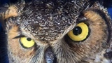 Owl Missed The Man Who Saved Her So Much She Couldnt Stop Hugging Him (Captioned With Update)