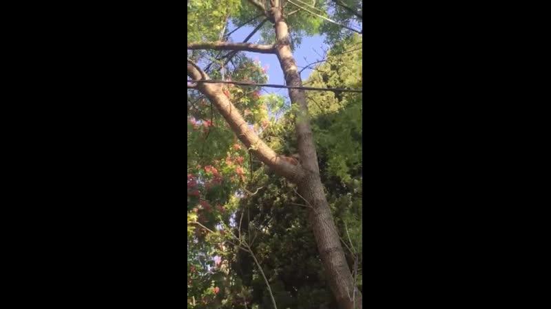 Video-adb7cb4f08fc6f4aa4a86a5c67ace188-V.mp4