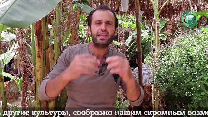 Молодой сириец запустил проект тропического леса на территории САР