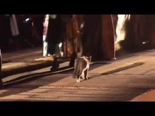 Кот на показе dior resort 2020