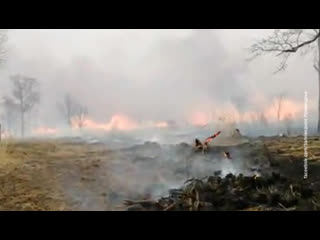 В Хабаровском крае пожар подобрался к месту обитания амурских тигров