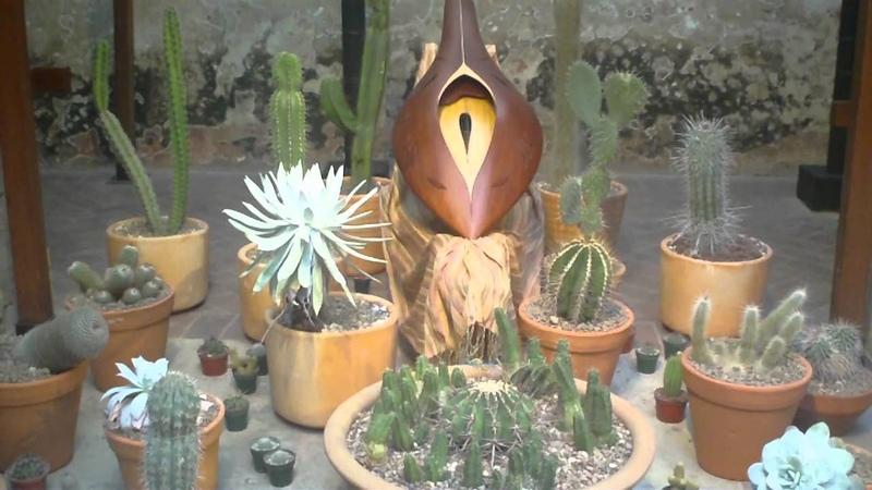 Concierto para plantas de Ariel Guzik en Guanajuato