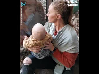 Орангутанг и мама с ребенком