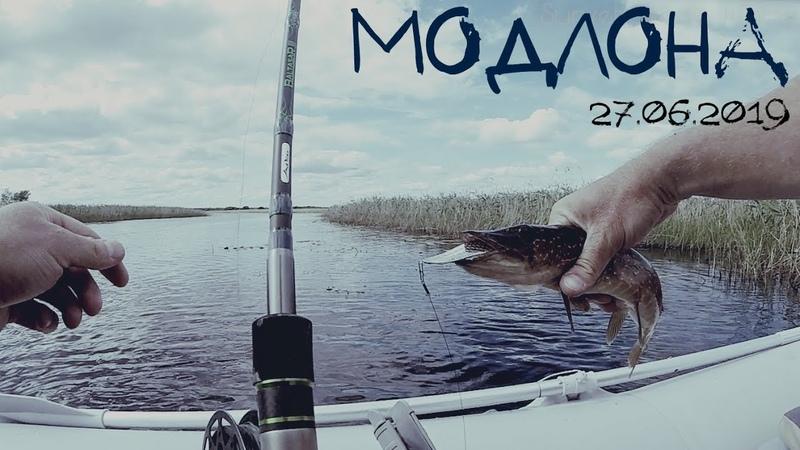Рыбалка на реке Модлона 27.06.2019. Badger Airline 390. Aiko Baltazar-III. Нельма..