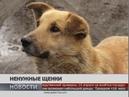 Ненужные щенки. Новости 12/04/2019 GuberniaTV