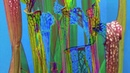Vadim Mukhin | Sarracenia Wave Cluster Pt. 1 (album teaser)