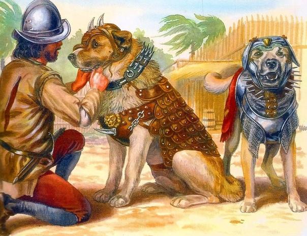 БЕСЕРИЛЬО, ПЕС КОНКИСТАДОРОВ, КОТОРЫЙ ПАЛ В БОЮ С ИНДЕЙЦАМИ Испанские конкистадоры принесли с собой в Новый Свет огромное количество предметов, предназначенных для покорения индейцев. Было у них