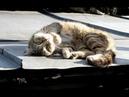 На крыше лежал приклеенный кот, над которым кружила стая воронов. Птицы безжалостно нападали