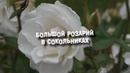 Прогулки по Москве Большой Розарий в парке Сокольники