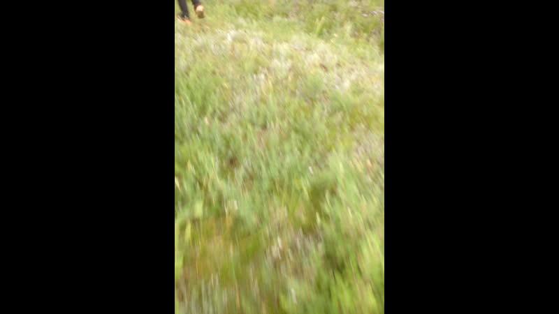 Гуляем на окраине качуге