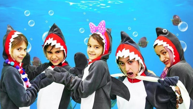 Bebek şarkısı! Baby shark Fındık ailesi. Çocuk videosu